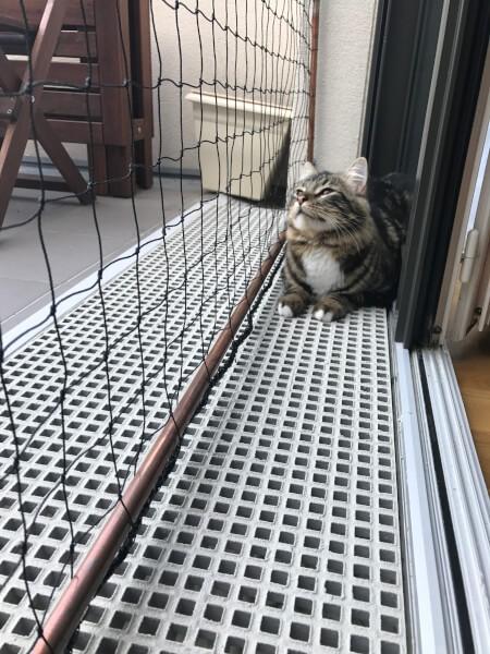 Filet de protection pour chat économique pour fenêtre et appartement