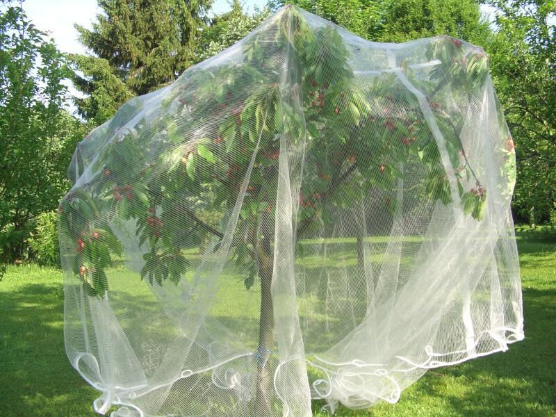 Filet pour protéger les abres fruitiers de la grêle et des oiseaux