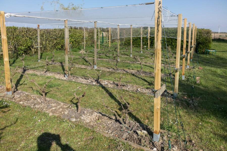 Protection d'un vignoble avec des filets anti-grêle