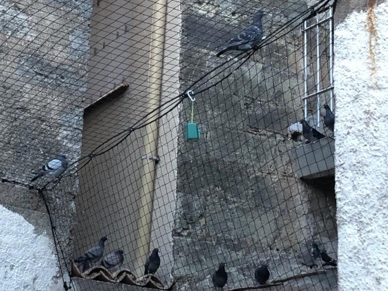 Filet volière anti-pigeons