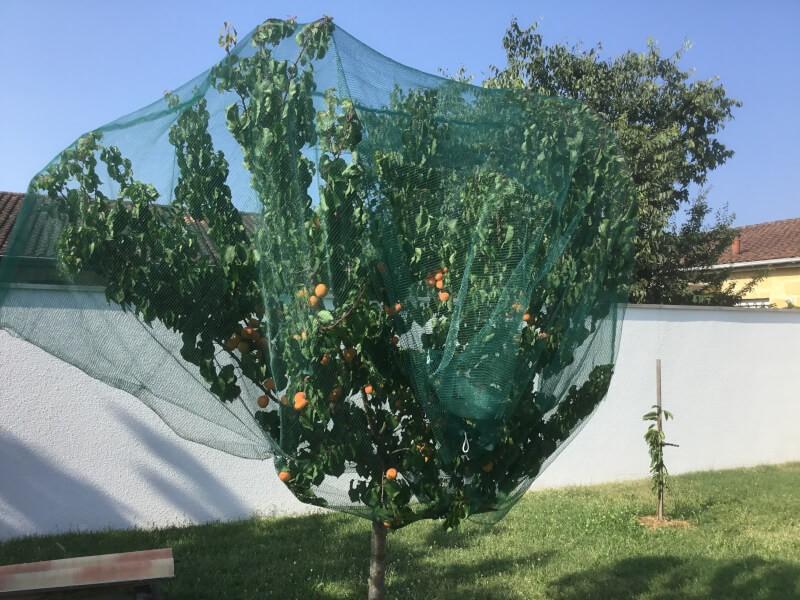 Filet anti oiseaux pour arbres fruitiers