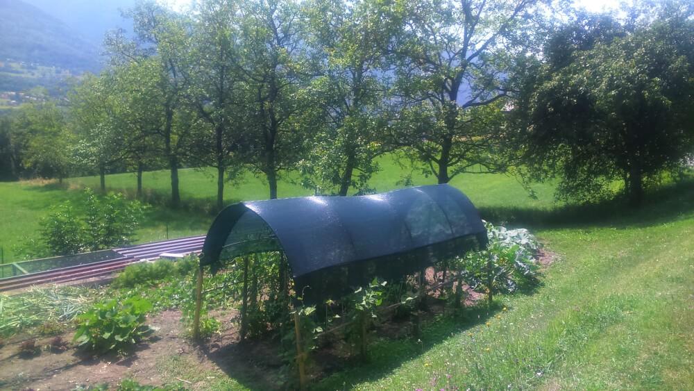 Filet d'ombrage pour plants de tomates