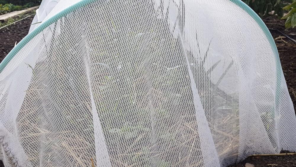 Filet de protection contre la mouche du poireau