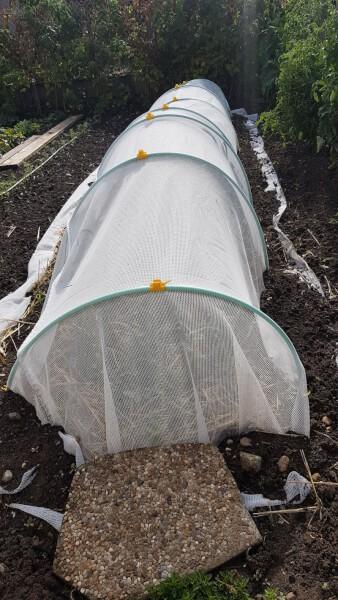 Filet de protection contre la mouche du poireau pour cultures