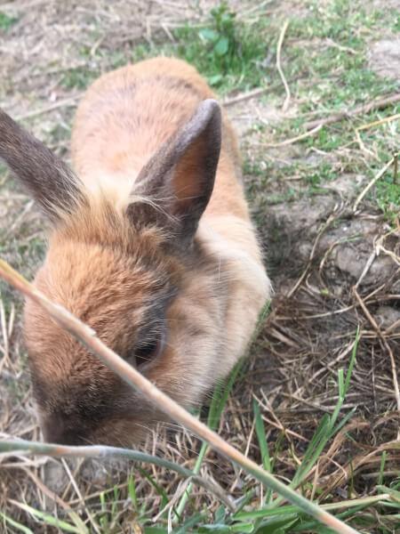 Filet pour enclos à la lapins