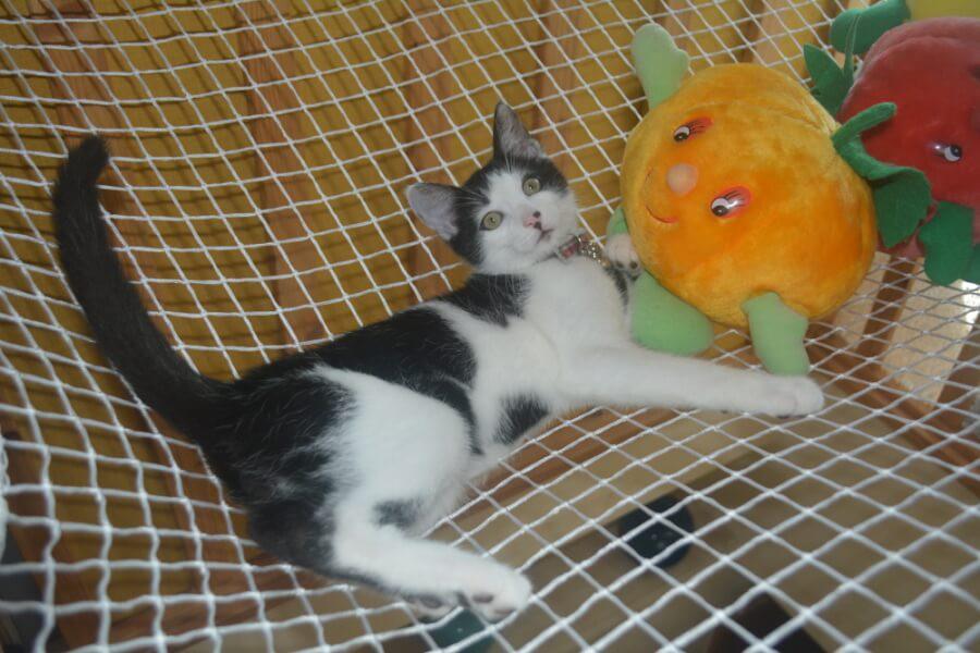 Filet de sécurtié mezzanine pour chat