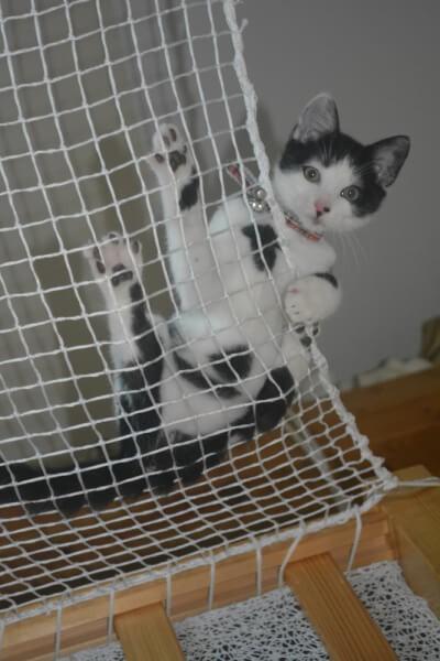 Sécuriser une mezzanine pour son chat