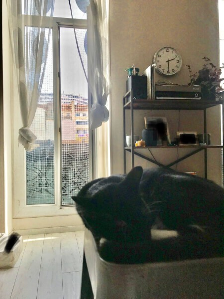 Filet de protection pour chaton pour fenêtre