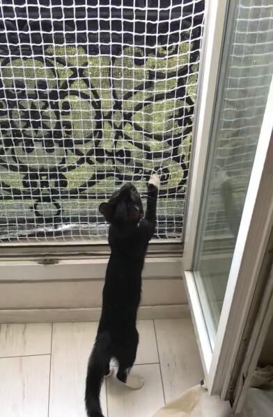 Filet de protection pour chat pour fenêtre