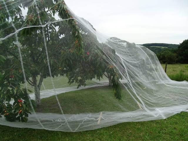 Filet pour arbre fruitier - Mailles 4 x 8 mm - 40 g/m² envoyé par un client