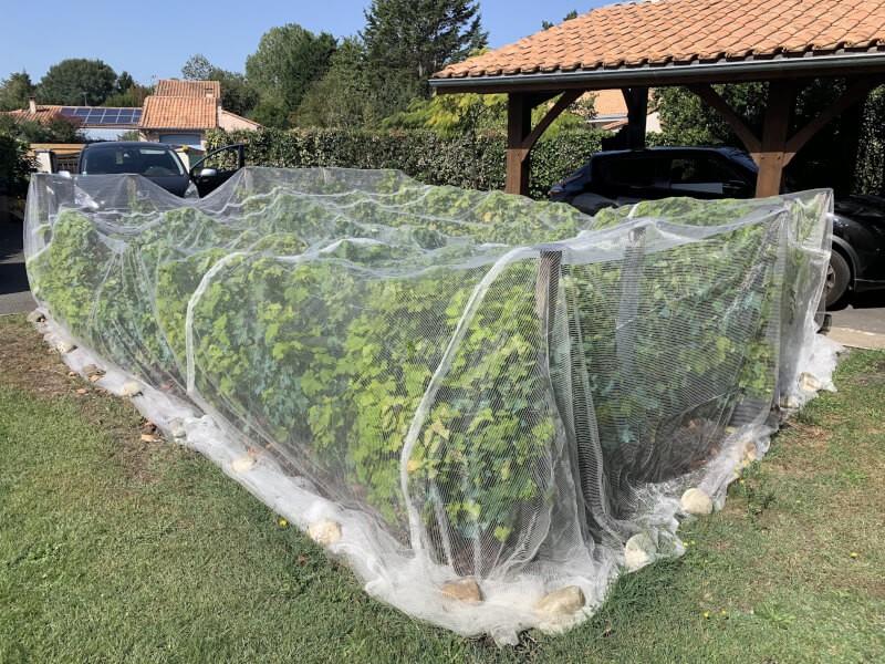 Filet anti-insectes pour raisin et vignes