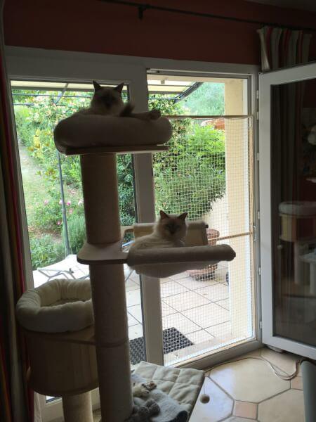 Filet de sécurité fenêtre pour chats