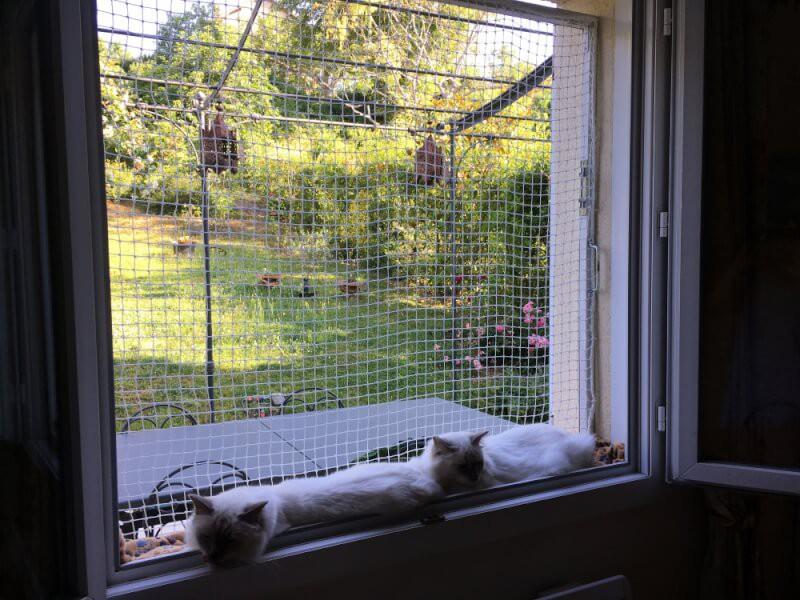 Sécuriser une fenêtre avec un filet de protection pour chats