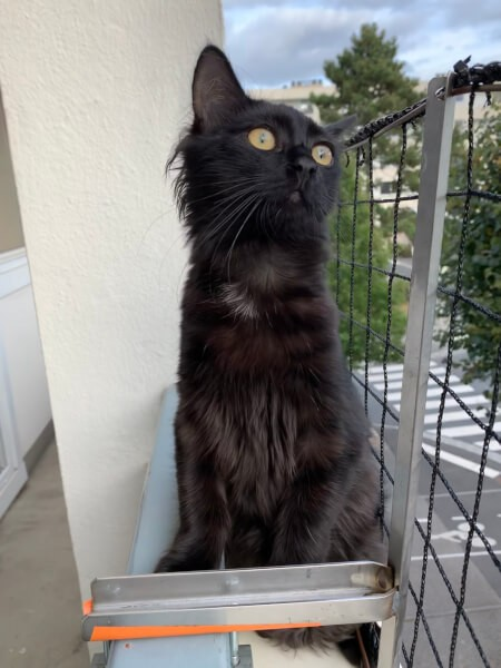 Filet protection chat pensif sur balcon