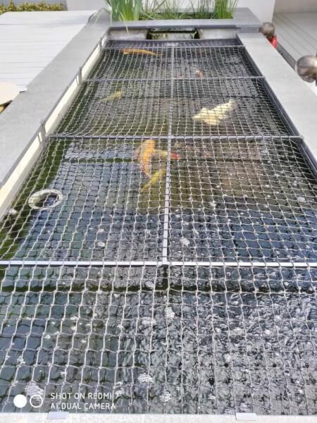 Protéger ses poissons avec un filet contre les hérons