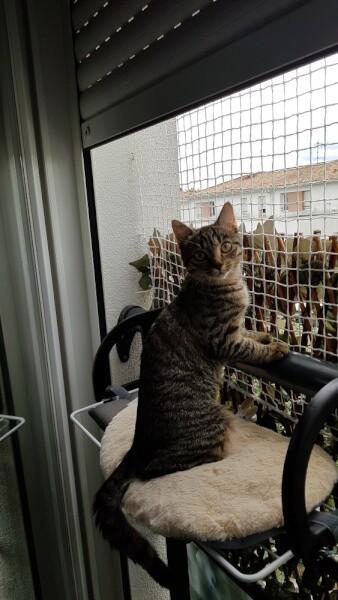 Filet de protection fenêtre pour chats