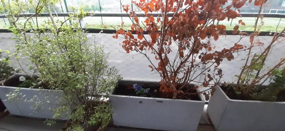 Filet brise-vue couleur sur balcon