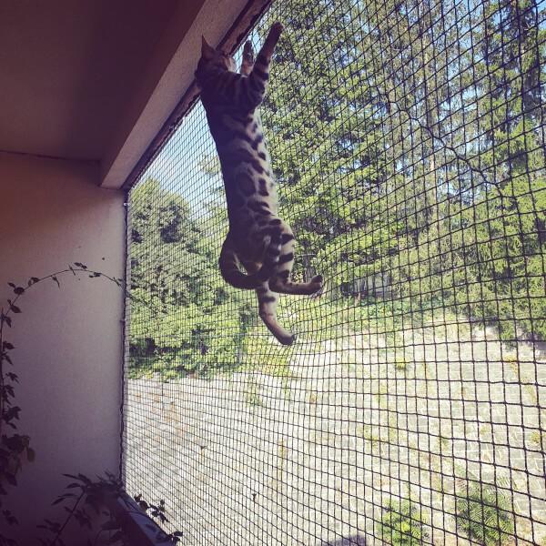 Filet anti-fuite pour chats installé sur fenêtre