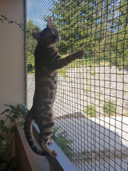 Filet protection de chats pour fenêtre