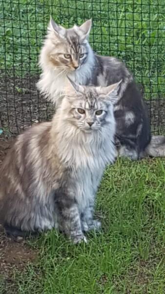 Filet de protection jardin pour chats mailles 25 mm