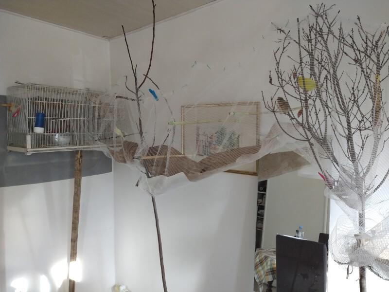 Création d'un tunnel pour oiseaux avec un filet anti-oiseaux