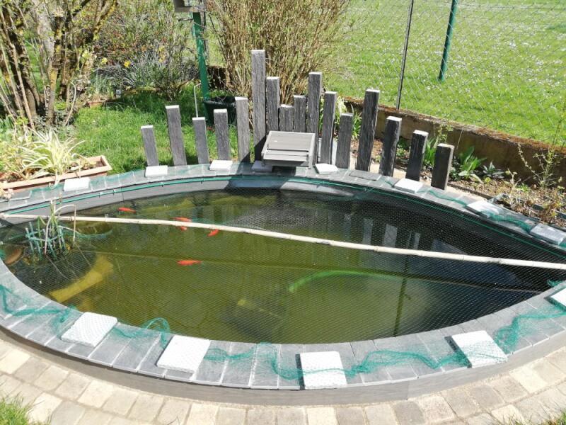 Filet anti-feuilles invisible sur bassin à poissons