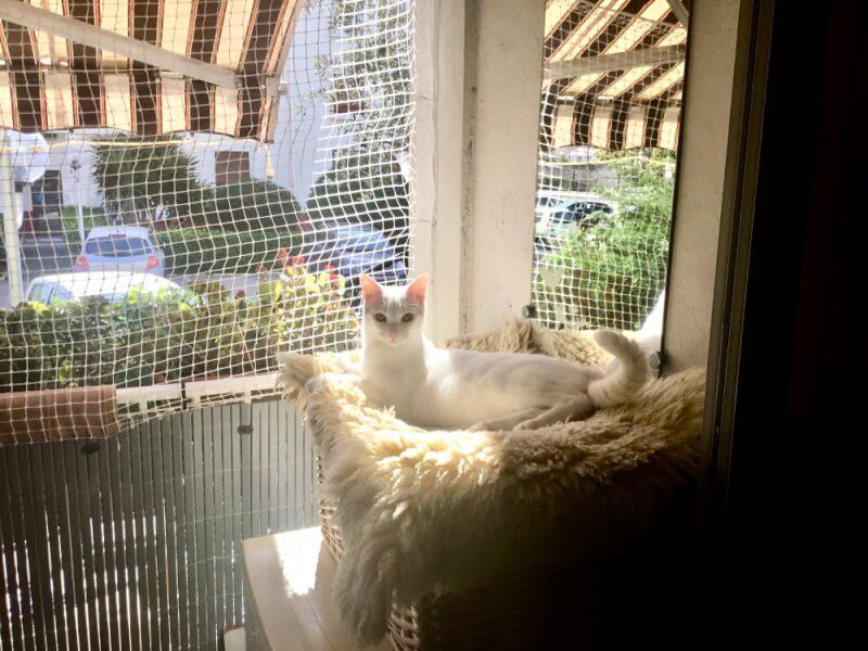 Filet de protection fenêtre et balcon pour chats