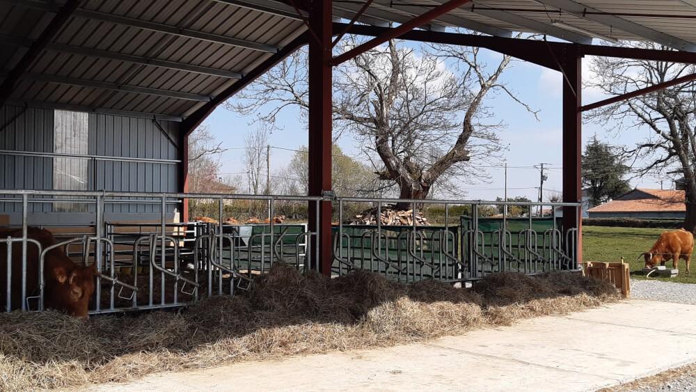 Brise vent vert pour stabulation bovins