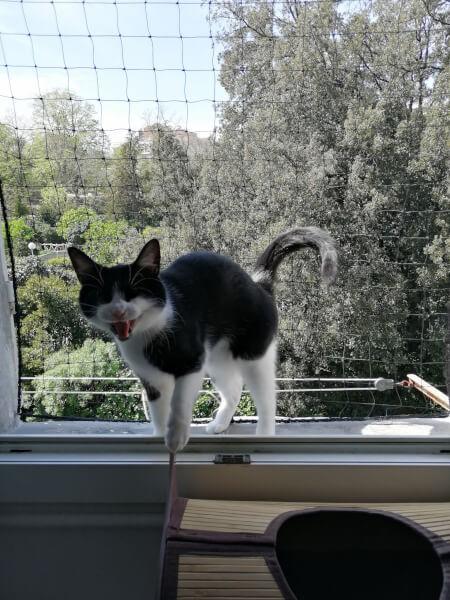 Filet de protection fenêtre pour chat
