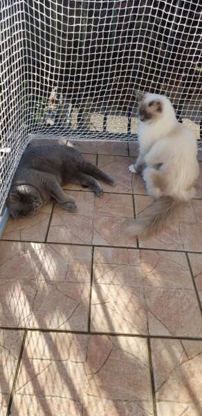 Protéger son balcon avec un filet de protection mailles petites pour chats