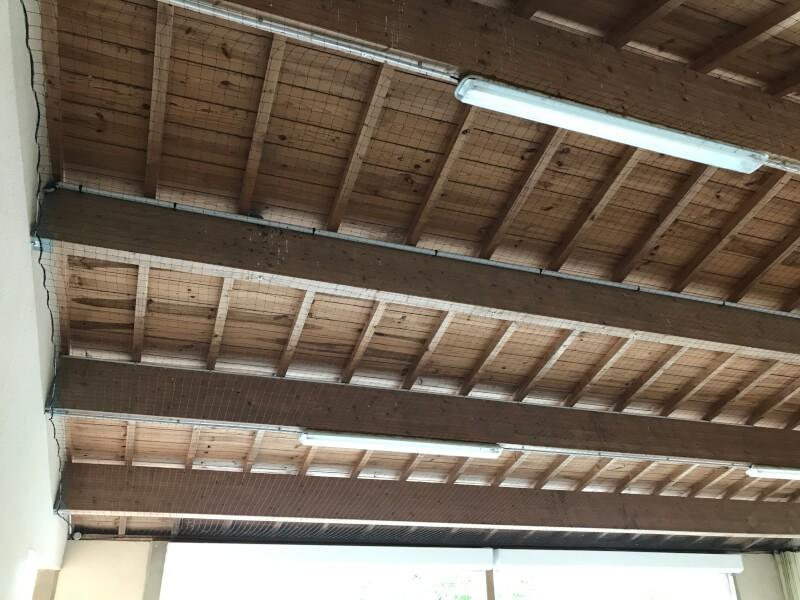 Filet pour repousser les oiseaux sous préeau école