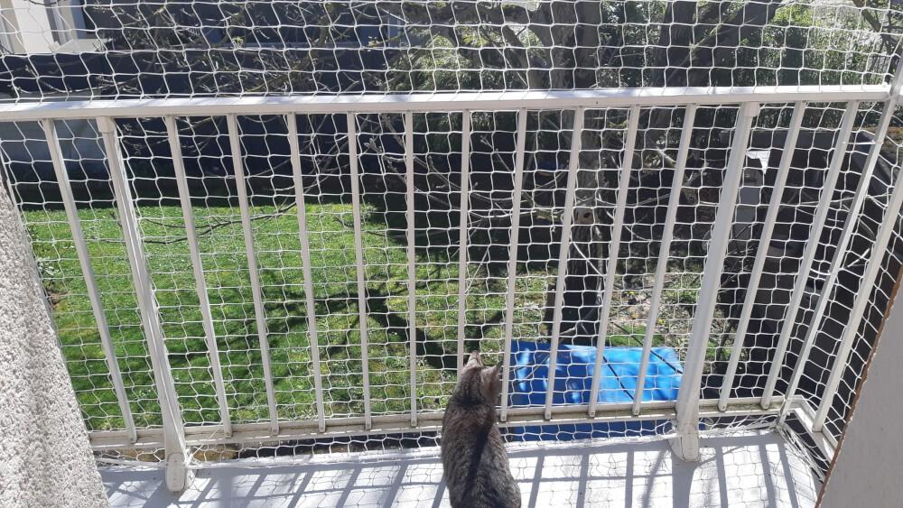 Filet de protection anti saut des chats pour sécuriser un balcon