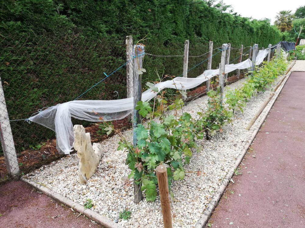 Filet anti-grêle replié pour protéger un rang de vignes