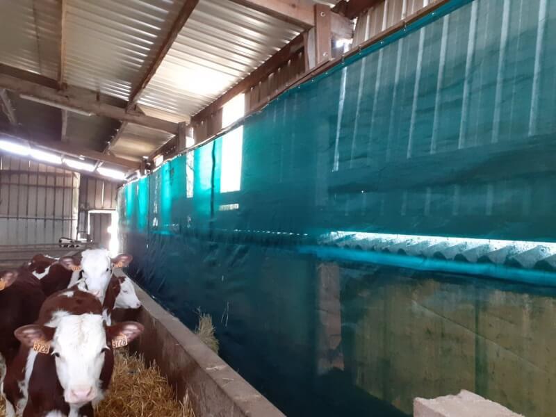 Filet brise-vent pour élevage veaux