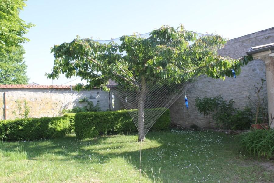 Filet de volière protection cerisier