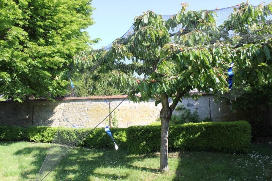 Filet de volière pour protéger un cerisier sans l'abimer