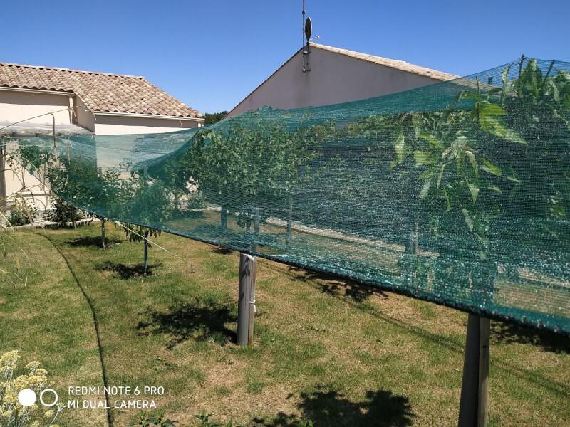 Filet anti-oiseaux recouvrant des arbres fruitiers