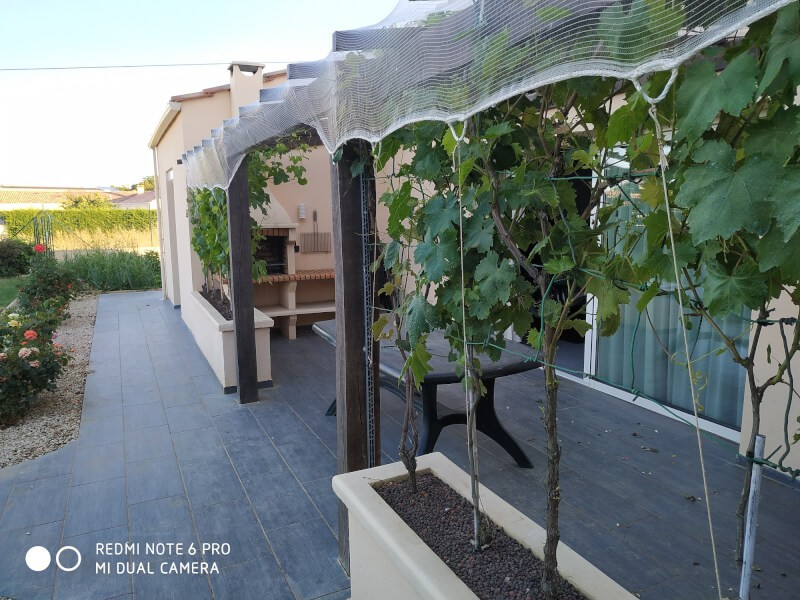 Filet anti-oiseaux très léger sur vignes
