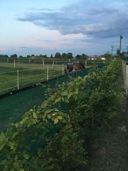 Filet brise-vent pour enclos équitation