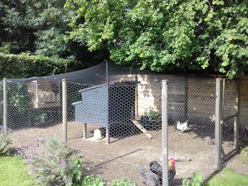 Filet de volière pour recouvrir un enclos à poules