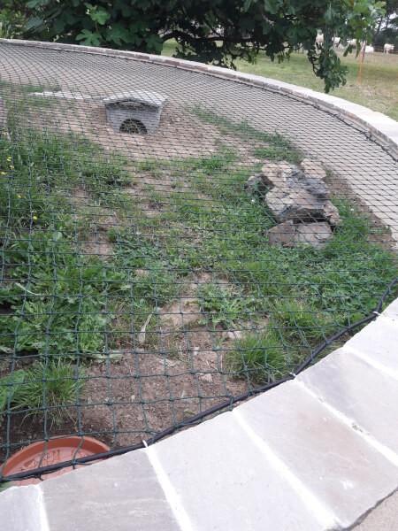 Créer un parc à tortues avec un filet et du sandow 8 mm