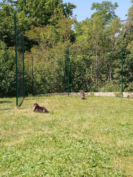 Filet souple pour chat permettant de sécuriser un jardin