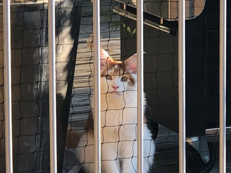 - Filet de protection pour chat économique - Mailles 50 mm