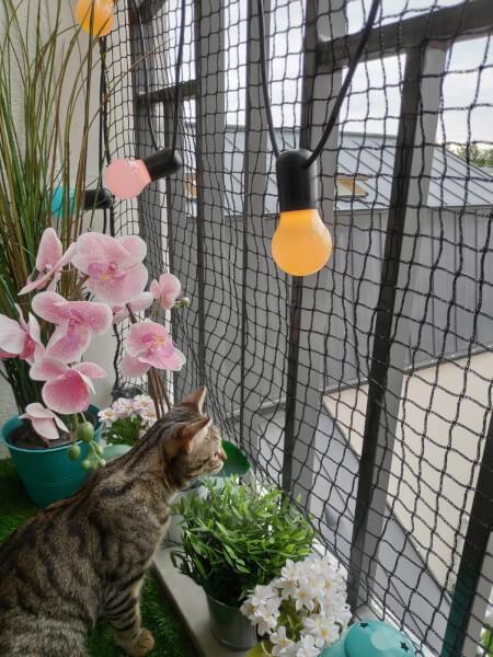 Filet de protection pour chats - Mailles 25 x 25 mm