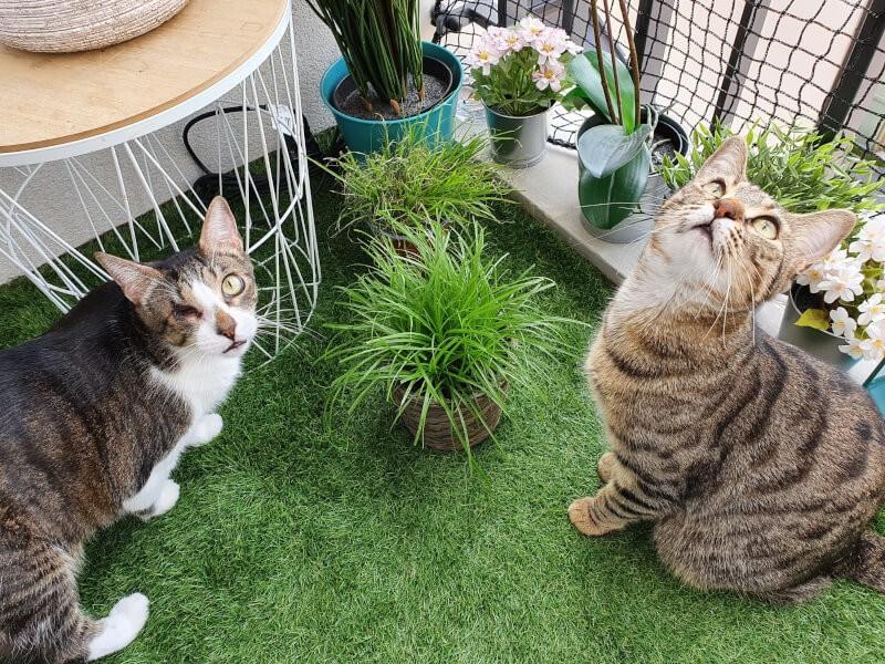Sécuriser un balcon avec un filet de protection pour chat