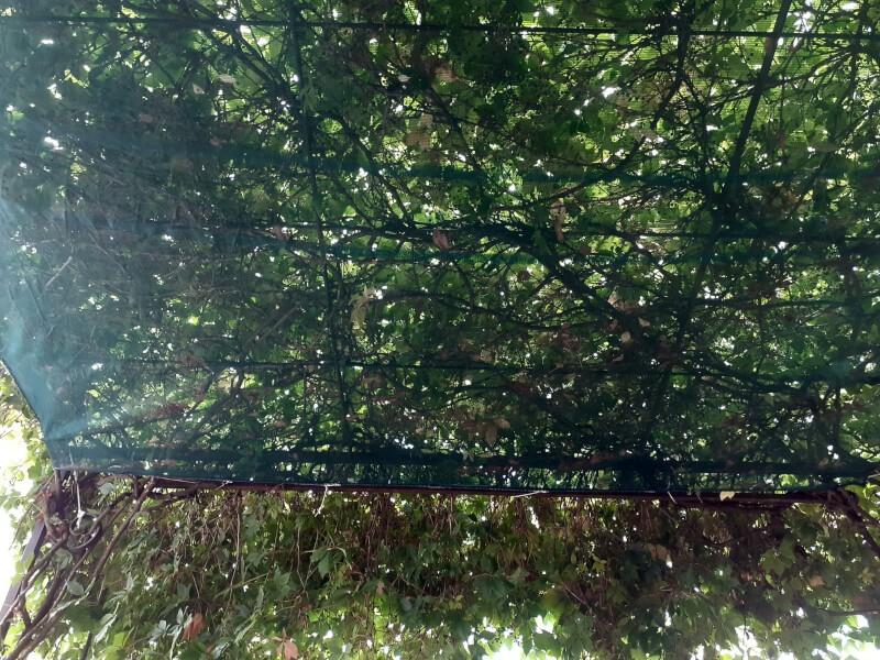 Protéger sa terrasse des feuilles avec un filet maille millimétrique