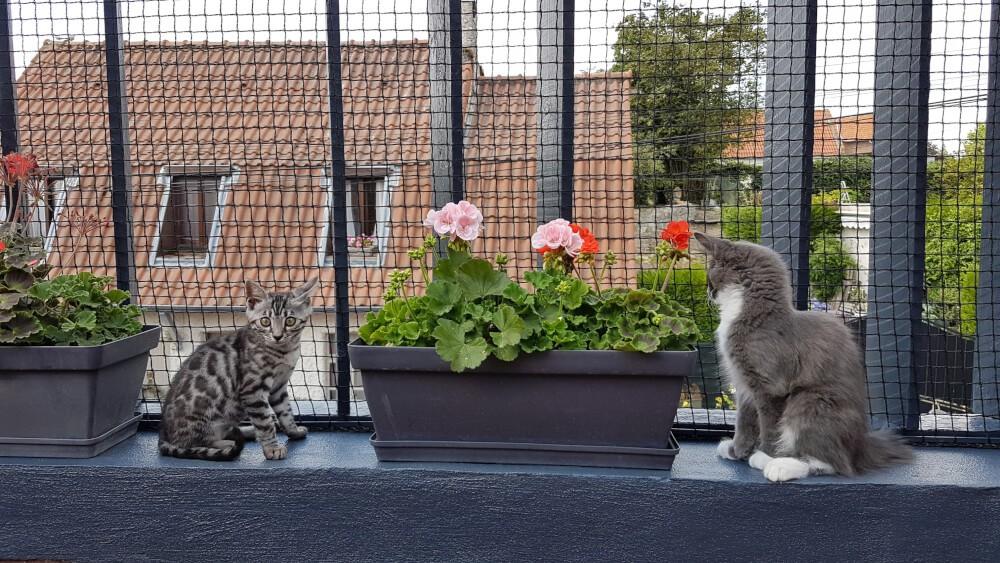 Prévenir la chutte de ses chats avec un filet de protection pour chats