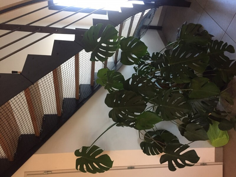 Sécuriser un escalier sans contremarche avec un filet de protection pour chats