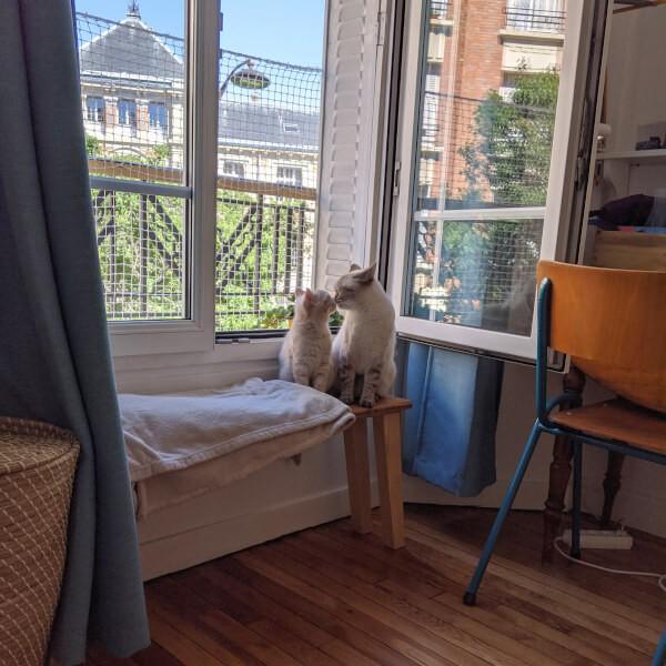Protection des fenêtres en ville pour emêcher la chute des chats