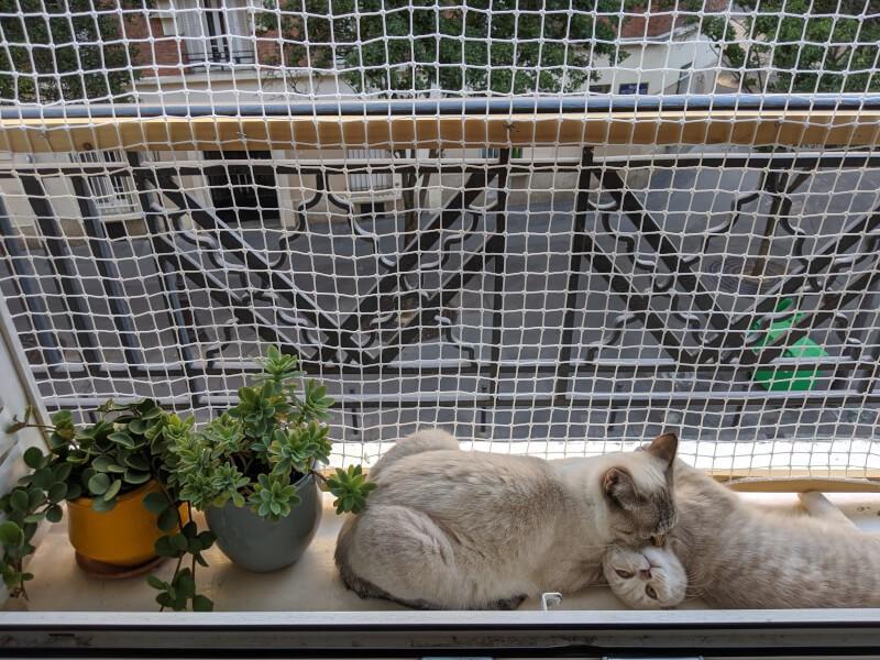 Filet contre les chutes des chats installé sur fenêtre